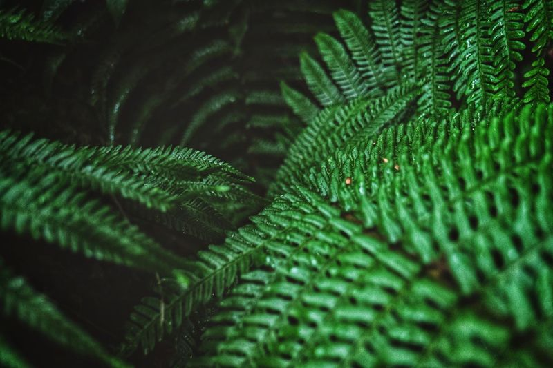 Green Color Leaf Nature Green Fern Close-up Growth Beauty In Nature Day No People Full Frame Backgrounds Freshness