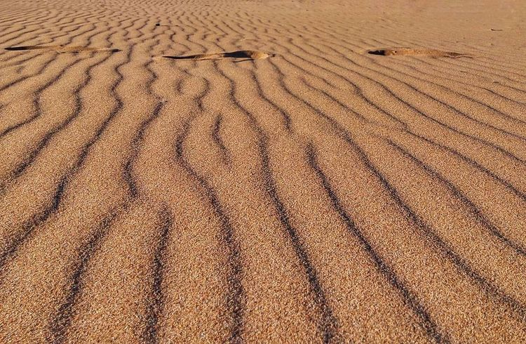 The Trace of the Truth ✨ the wild desert of Algeria ✨ Sand Full Frame Textured  Beautiful Destination Horizen View Sand Dune Arid Climate Desert Nature Backgrounds Coulours  Warm Beauty In Nature Majestic Landscape Outdoors Foottrace
