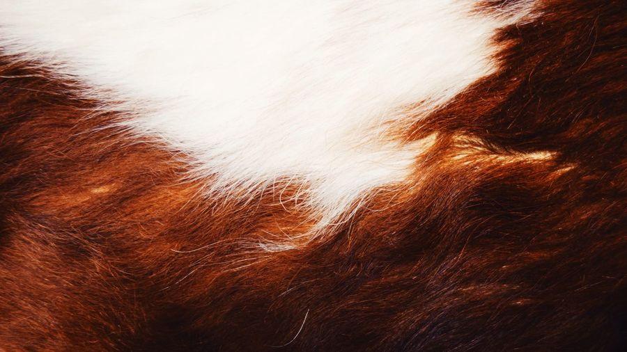 Full frame shot of cow hair