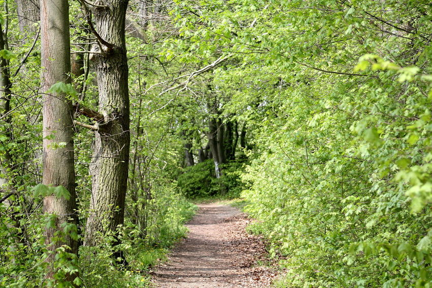 Beauty In Nature Beauty Of Nature Day Forest Forrestway Freshness Green Growth Landscape Leafs Nature No People Outside Scenics Spring Tranquility Trees Way Ahead