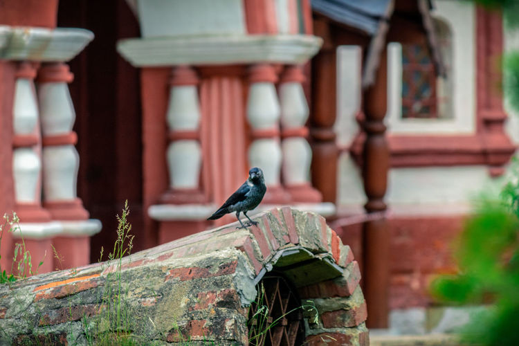 Close-up of bird perching on a building
