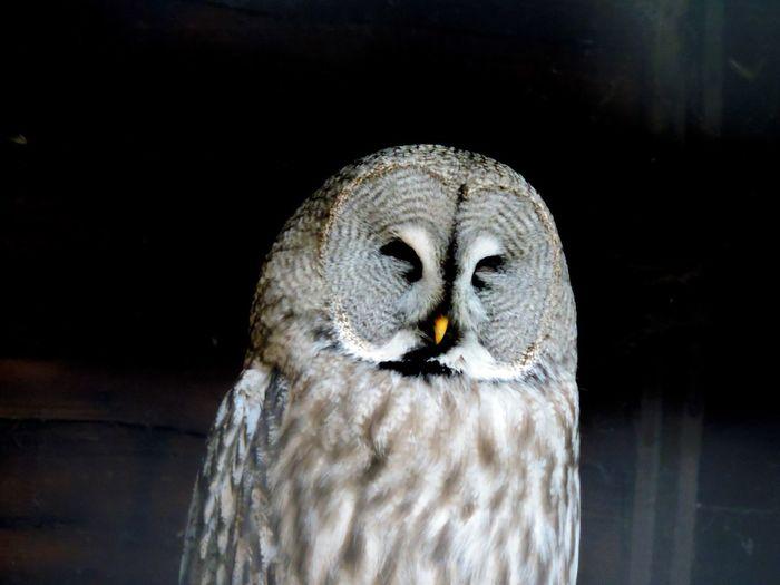 Owl Dark