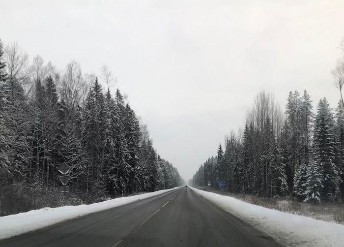 Car Travel Tree