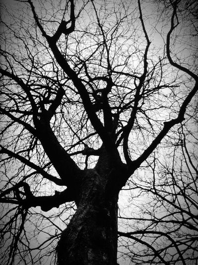 Nature at its best: Scary looking but beautiful! Nature_perfection Creepy Nature Shots Bare Tree Tranquility