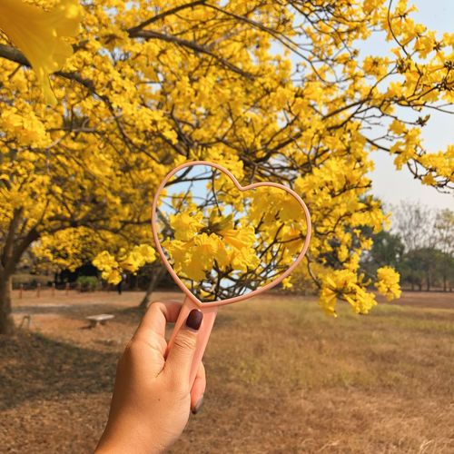 Yellow flower in a heart mirror. Human Hand Hand Human Body Part Tree Plant One Person Yellow Nature Beauty In Nature Flower Personal Perspective Day Flowering Plant