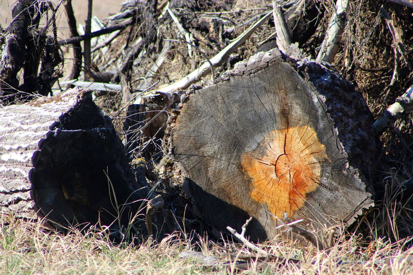 Close-up Cut Growth Rings Hungarian Border Log Nature No People Old Orange Outdoors Past Second Fence Secret Tree Tree Tree Trunk Wood - Material Years Day