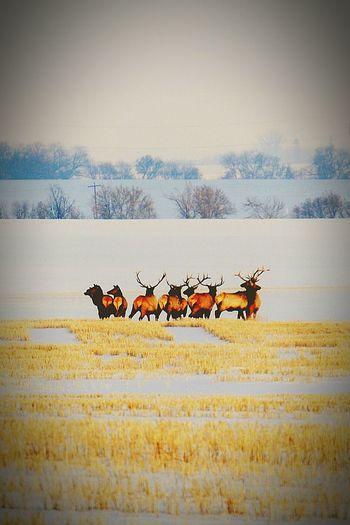 Nature Winter Snow First Eyeem Photo