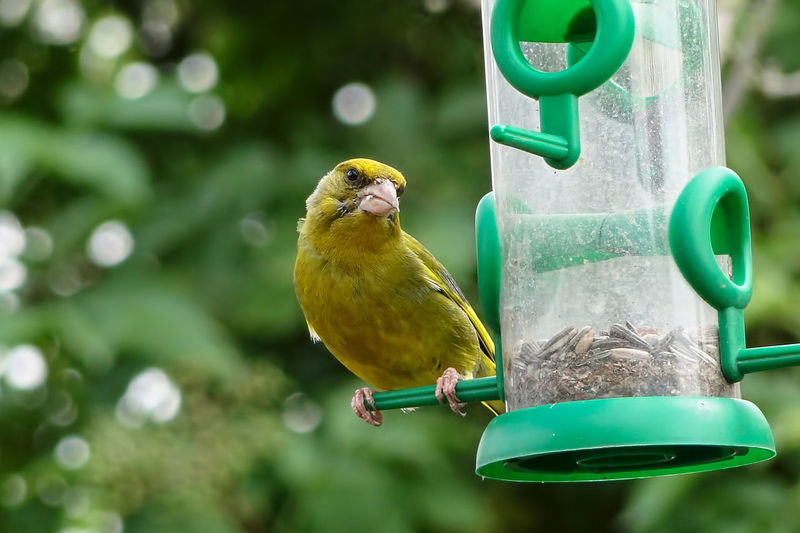 Close-up of bird perching on bird feeder