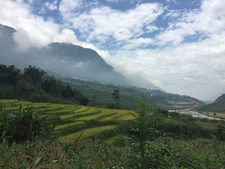 Agriculture Beauty In Nature Cloud - Sky Day Field Grass Growth Landscape Mountain Mountain Range Nature No People Outdoors Sapa, Vietnam Scenics Sky Terraced Field Tranquil Scene Tranquility Tree