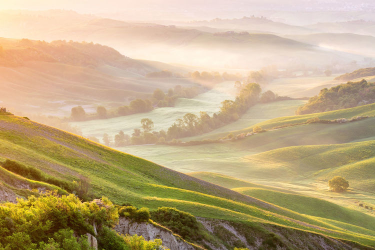 Fog in a valley with fields and trees at dawn