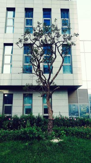 Whats Tree