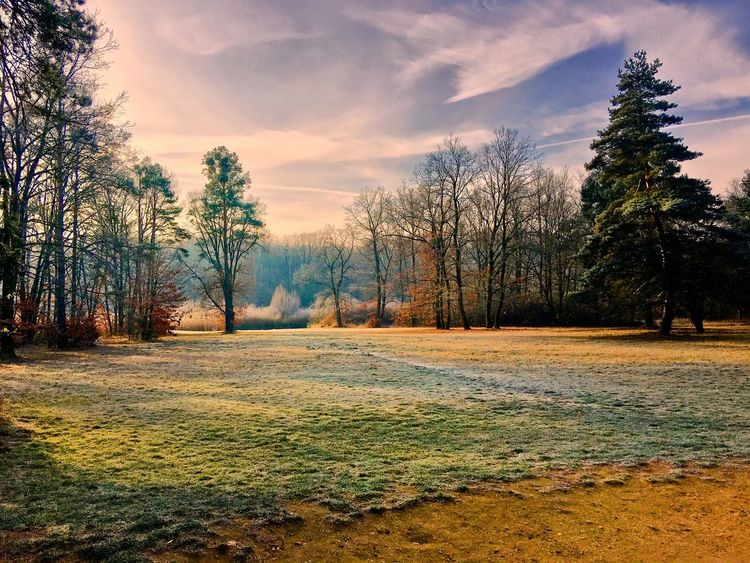 Warm winter. Tree Nature No People Sky Beauty In Nature Day First Eyeem Photo