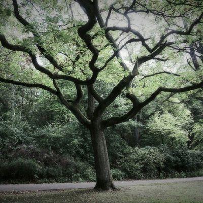 Ic_trees Insta_crew Igersgothenburg Igers treescollection treeworld natureonly instanaturefriends ic_nature fineartstorage rsa_nature art_feeling sonynex5r sonynex frameable quite_interesting fingerprintofgod mostdeserving art_feeling rsa_trees