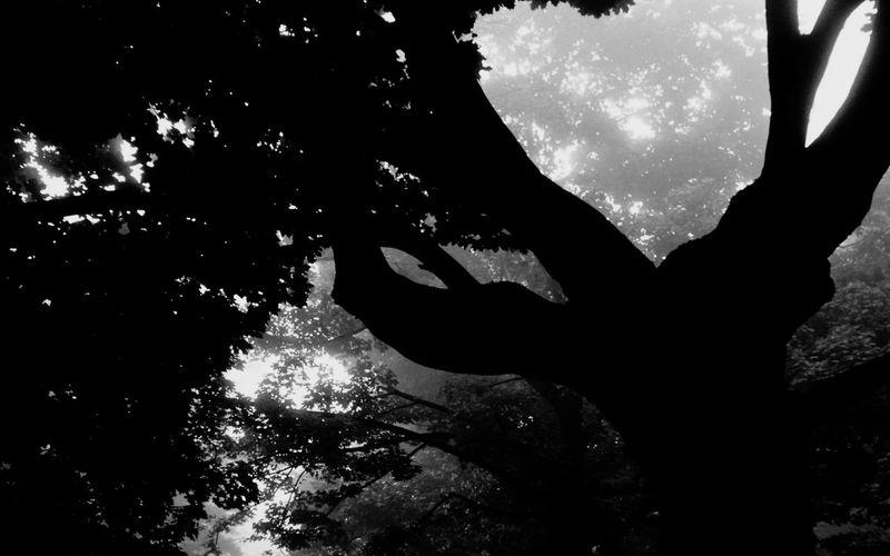 Природа темнота First Eyeem Photo