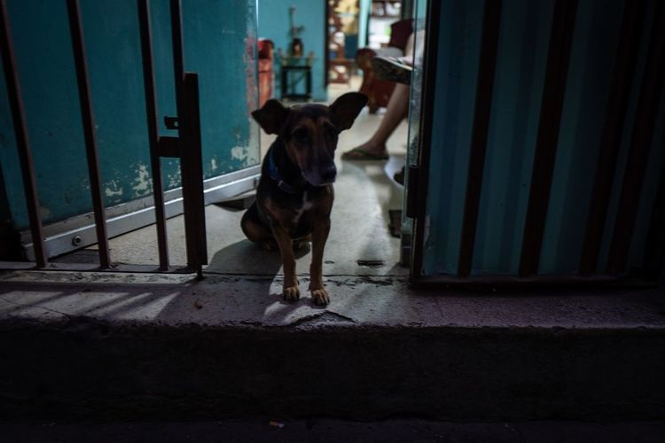 Dog standing at entrance of window