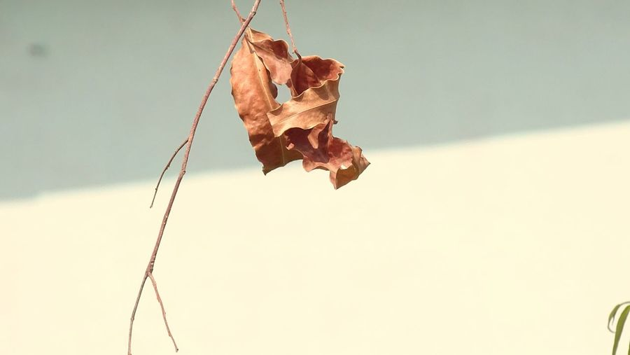 Hanging Day No People Close-up Outdoors Sky Dryleaf Dryleaves Dryleavesnbranches