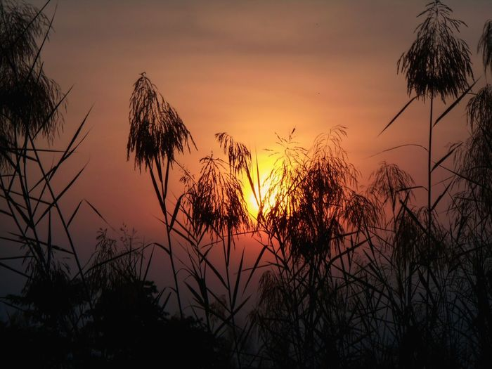 Surreal Nature and Sunset Sunset Nature Beautifil New Best  Scenery ExploreEverything Tree Flower Sunset Beauty Silhouette Sun Dusk Sky Close-up Plant Calm