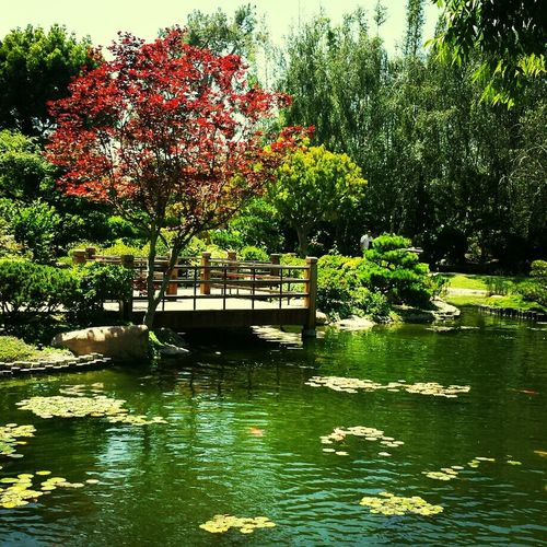 Japanese garden at cal state long beach Beautiful Relaxing Nice Day Had Fun