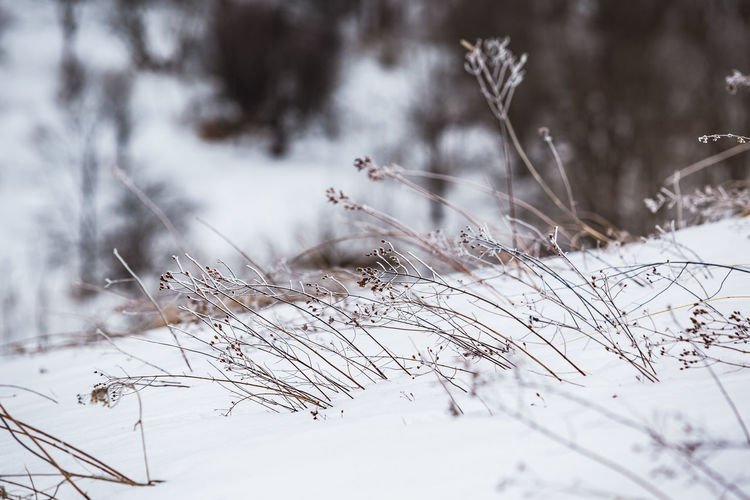 Snow covered plant on field