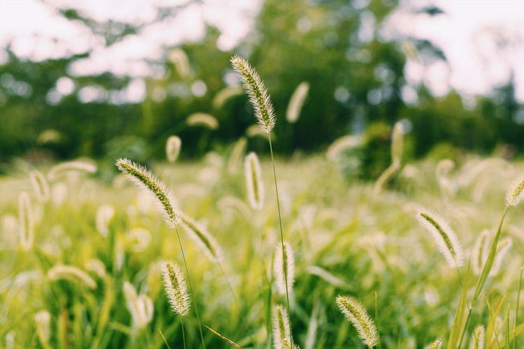 ゲジゲジ Plant