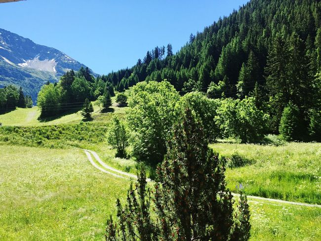 Summertime Summer Mountains What A Wonderful Day! Wonderful View Relaxing Sunny Day Noclouds Enjoying Life Allgreen Perfection Alps