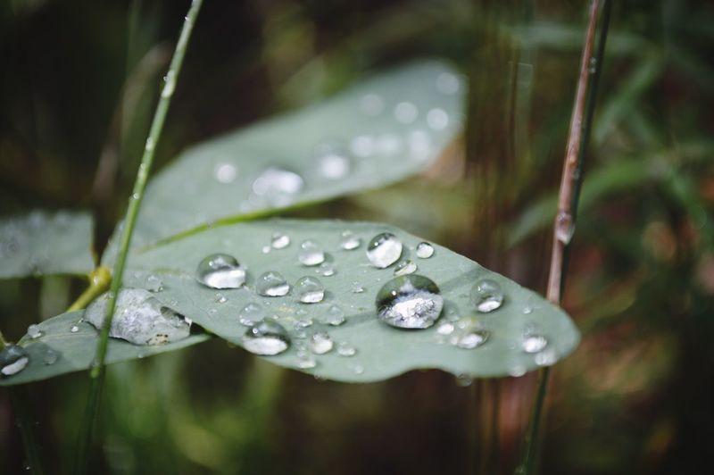 Macro Photography Fresh Droplets Of Water Greenery After The Rain Up Close High Country Adventure Beauty In Nature