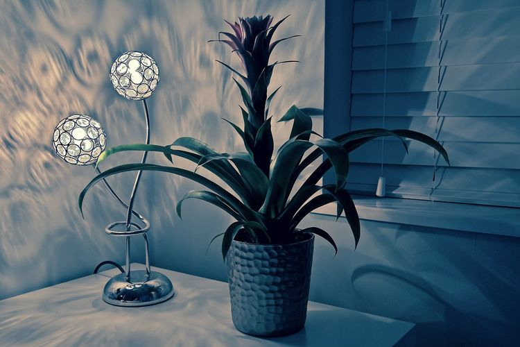 Close-Up Of Plant By Lamp On Table At Home