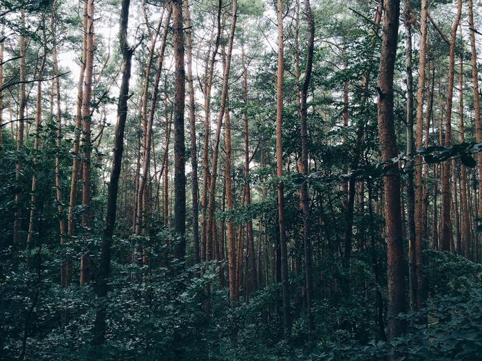 Trees. Nature Forest