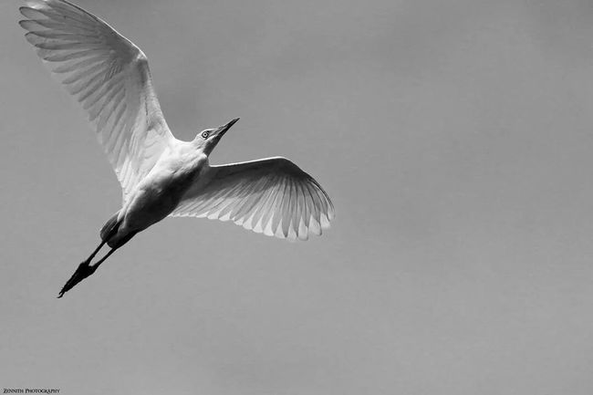 EyeEm Best Shots Black & White EyeEm Nature Lover Birds