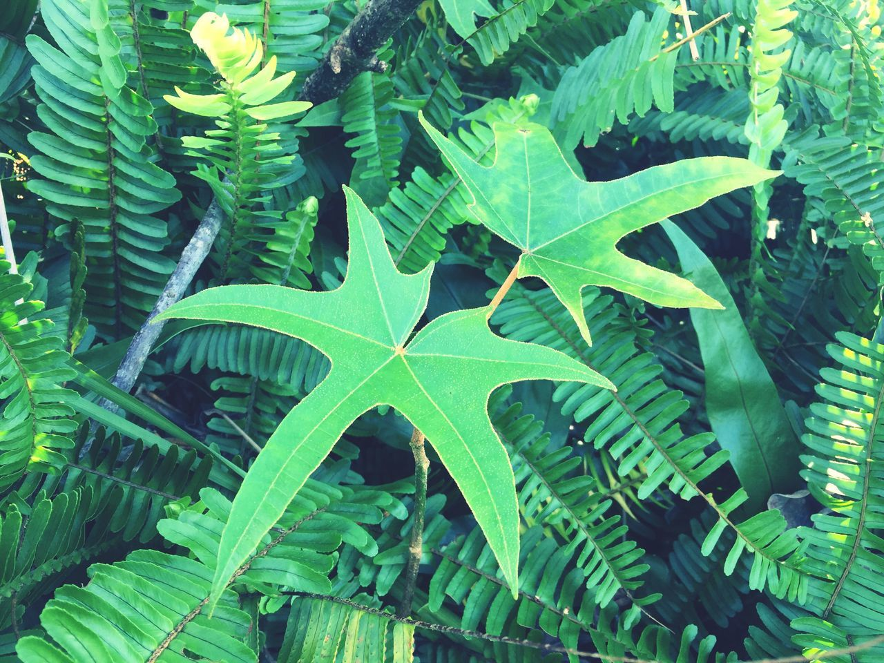 leaf, green color, growth, nature, day, no people, close-up, outdoors, plant, beauty in nature, fragility, freshness, animal themes