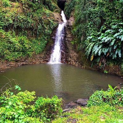 Naturewalks Nature Landscape_captures Awesome_captures Ilivewhereyouvacation Islandlivity Ig_worldclub Islandlife Instagram Westindies_pictures Westindies_bnw Wu_caribbean World_union Grenada