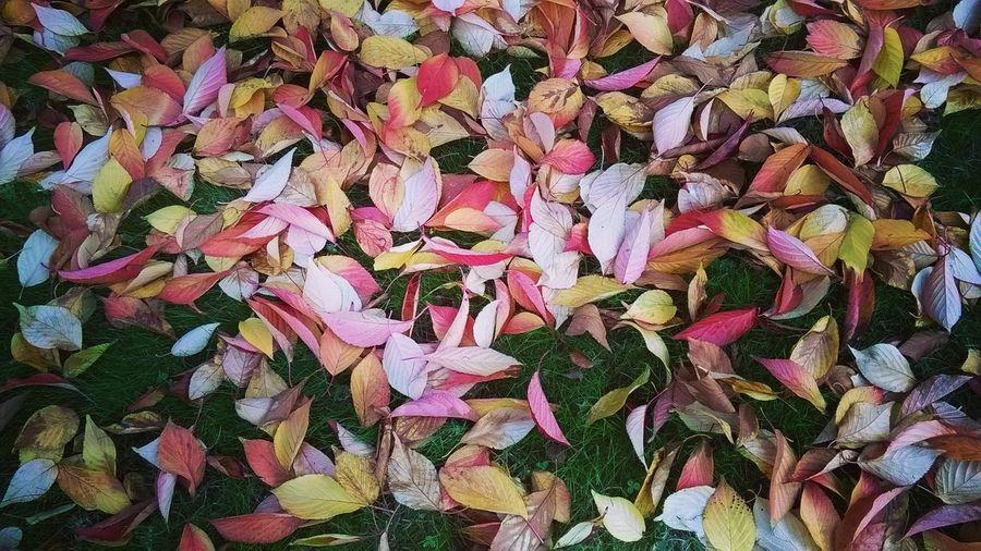 Hojas No People Hojas De Otoño Hojas De Colores Flowers Flowers, Nature And Beauty Nature Naturaleza Naturaleza🌵🌻🎶 EyeEm Diversity Youmobile