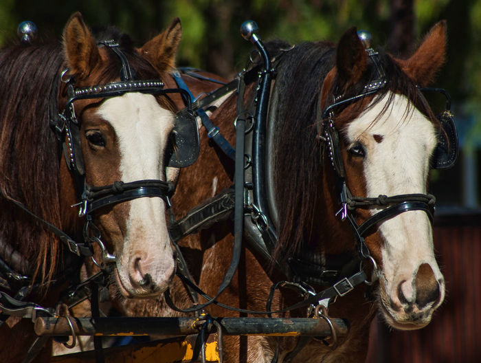 Close-up of horses