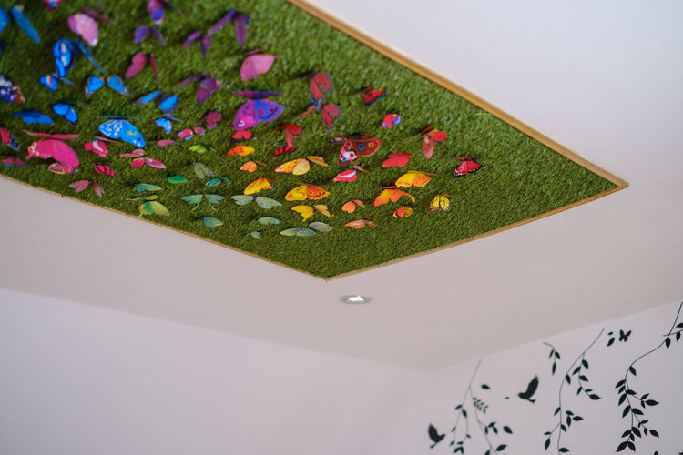 High angle view of multi colored flowering plant
