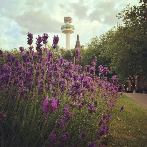 Liverpool Radiotower Lavender City Outdoors Colors Beautiful Day Tower