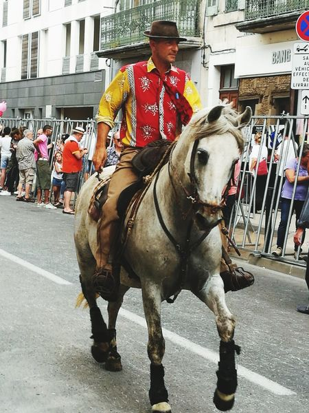 Feria de nimes Horse One Animal One Man Only One Person Men City