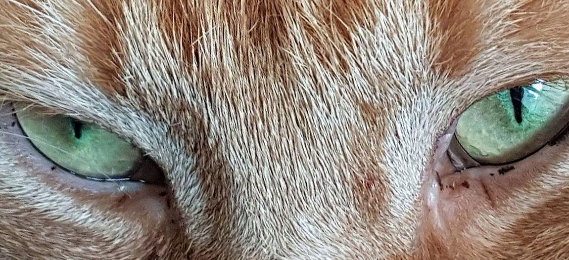 One Animal Domestic Animals Portrait Pets Looking At Camera Feline Companions Eyeemphoto Cat♡ Cats Of EyeEm Cats 🐱 Catlover EyeEm Gallery EyeEm Best Shots Artphotography Firsteyeemphoto☺ EyeEm Selects Domestic Cat Feline Portraits Feline Eyes Green Eyes Cat Eyes Cat Photography Cats 🐱