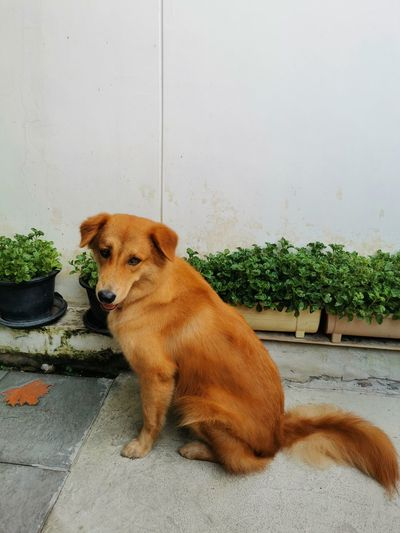 Portrait of dog sitting on potted plant