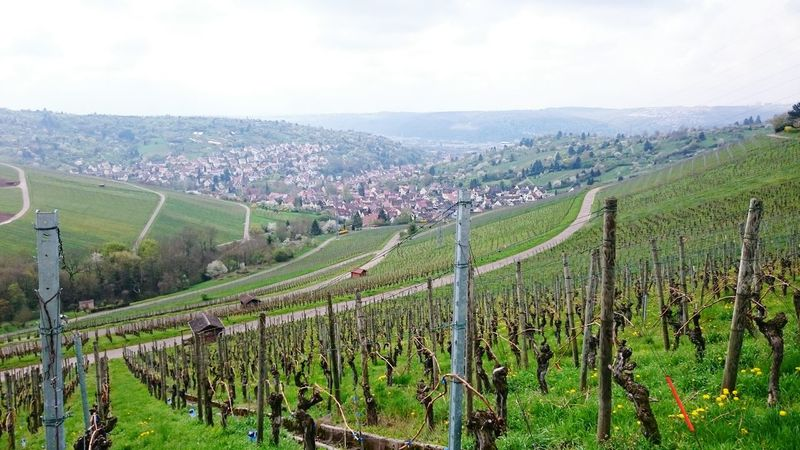 Schwabenland Schwabenländle Stuttgart Weinberg Hanging Out Taking Photos Check This Out Enjoying Life April April 2016 April Showcase First Eyeem Photo Xperiaphotography