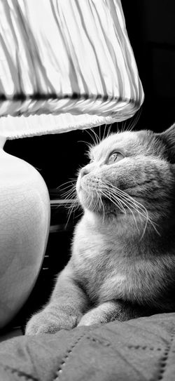 Close-up of cat relaxing on sofa at home