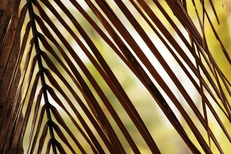 Palm Tree Frond