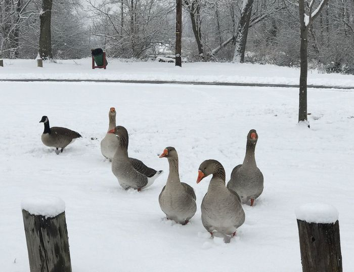Flock of birds on frozen tree during winter