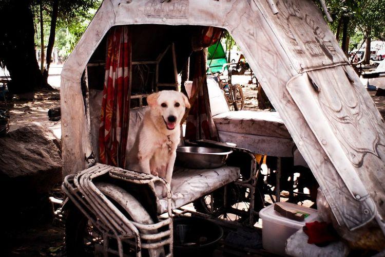 Dog sitting on wood