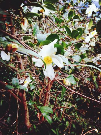 camellia??? Relaxing Walking Around Hugging A Tree