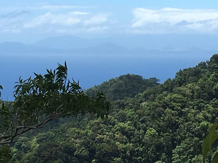 Dominica Agriculture Banana Tree Beauty In Nature Cloud - Sky Day Green Color Growth Landscape Mountain Nature No People Outdoors Scenics Sky Tranquil Scene Tranquility Tree