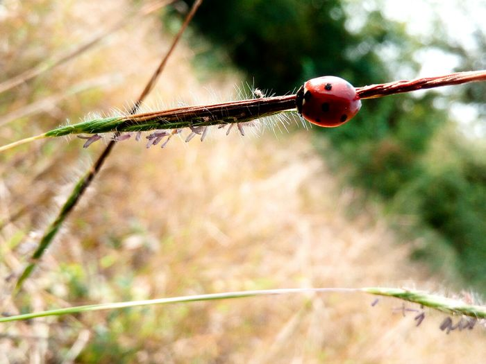 Photography Ladybug🐞 Sunset Plants Shots PhonePhotography Passion