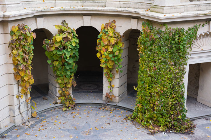Architecture Autumn Autumn Colors Building Exterior Creeper Plant Czech Republic Day Grebovka Green Color Growth Havlickovy Sady Horizontal Ivy Leaf Nature No People Outdoors Park Plant Prague