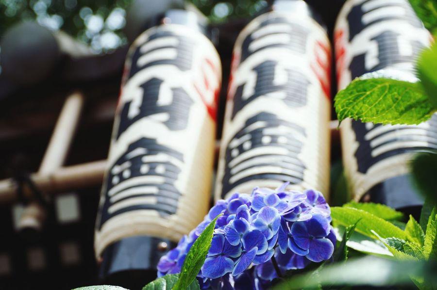 今日も朝から良い天気になりそう。 紫陽花 あじさい 紫陽花の花 Hydrangea