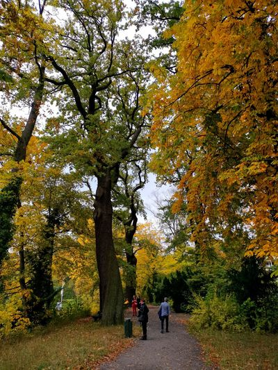 Rear view of people walking amidst trees during autumn