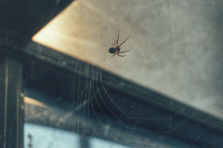 2019 Niklas Storm Juni Insect Spider Web Spider Window Close-up Web Animal Leg Animal Limb Spinning